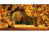 Park, Herbstlich, Eichenbaum