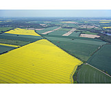Agriculture, Aerial View, Rape Field