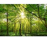 Natur, Wald, ökologie