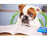 Finanzen, Bulldogge