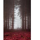 Forest, Autumn, Fog