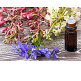 Homeopathic, Alternative Medicine, Bach Flowers