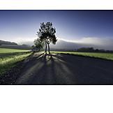 Calm, Nature, Fog, Shadow