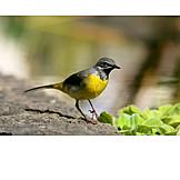Bird, Stilts