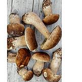 Cepe, Mushroom, Mushroom