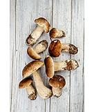 Cepe, Mushroom, Mushroom season