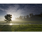 Morning mood, Paddock, Rural scene