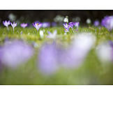 Spring, Meadow, Season
