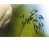 Gräser, Makro