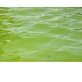 Water, Green Alga