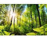 Sunlight, Forest, Light Beam