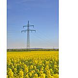 Rapsfeld, Alternative Energie, Stromleitungen