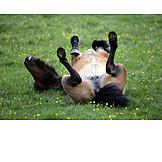 Sorglos & Entspannt, Pferd