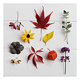 Nature, Autumn, Autumn leaf