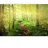 Nature, Forest, Path, Path