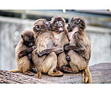 Togetherness, Monkeys