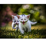 Humor & Skurril, Tierjunges, Katze