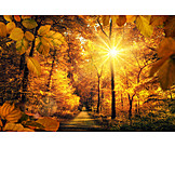 Autumn, Autumn Forest, Deciduous Forest