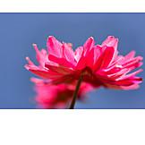 Flower, Wind Rose