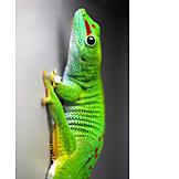 Gecko, Day gecko