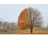 Tree, Leaves, Autumn