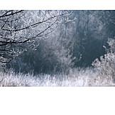 Winter, Winter landscape, Frost