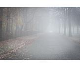 Danger & Risk, Fog, Road