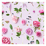 Backgrounds, Pink, Flowers