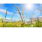Spring, Grass