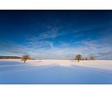 Winter Landscape, Trees, Winterly