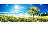 Landscape, Flower Meadow, Spring