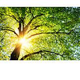 Sonnenlicht, Frühling, Blätterdach