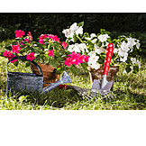 Gardening, Garden decoration, Repot