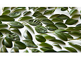 Leaves, Close-up, Leaf