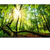 Wald, Frühling, Laubwald