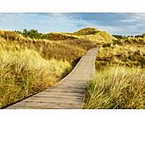 Footpath, Dune, Marram grass
