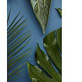 Leaf, Fan palm, Monstera
