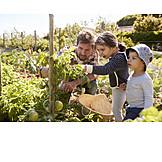 Gardening, Vegetable harvest, Nature observation