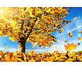 Autumn, Autumn Leaves, Breezy