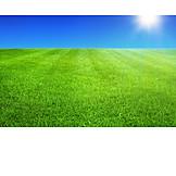 Sun, Meadow