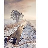 Sunlight, Winter Landscape, Frost