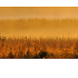 Hintergrund, Natur, Morgendämmerung, Gras, Morgennebel
