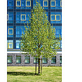Architecture, Tree, Office Building