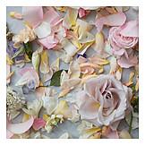 Petals, Flowers, Pastel Colors