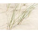 Hintergrund, Wellness & Relax, Strand, Dünen, Dünengras
