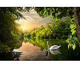 Natur, See, Schwan, Verwunschen