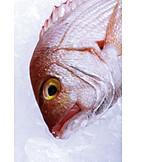 Prepared Fish, Gilt Head Bream, Pagellus Erythrinus