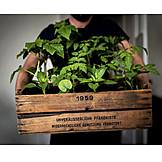 Gardener, Seedlings, Urban gardening
