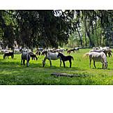Pasture, Horses