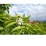 Blossom, Pollinate